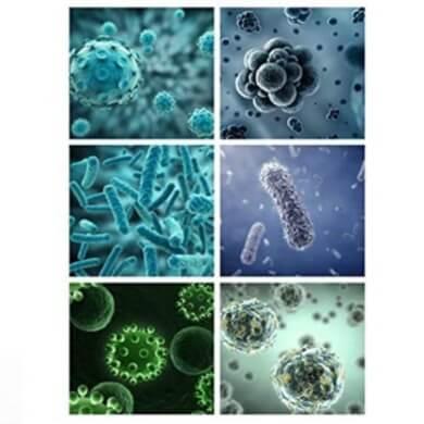 bacterias virus ácaros gérmenes microorganismos depuración desinfección esterilizar