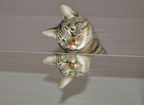 vidrios y espejos